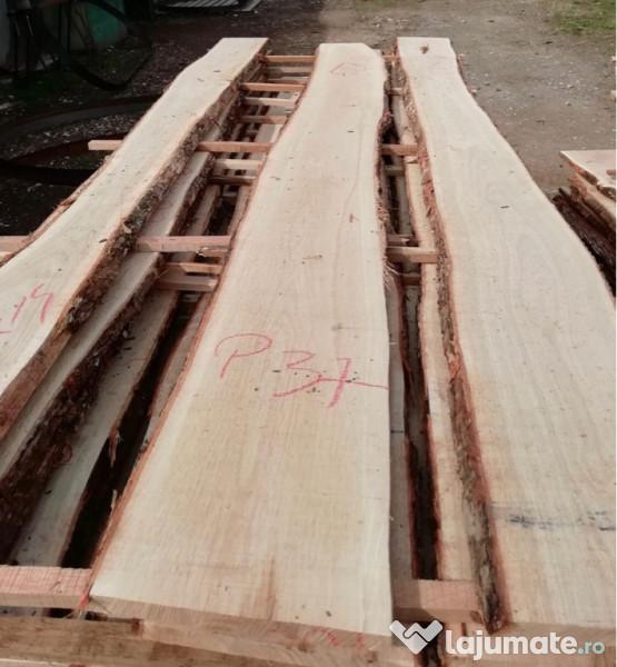Principalele tipuri de lemn, caracteristici, clasificare și domeniu de aplicare