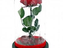 Trandafir Criogenat 9cm in cupola sticla Frumoasa si Bestia