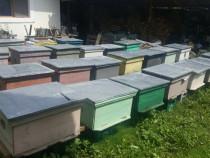 Familii de albine stupi