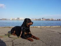 Dresaj si consiliere canina in suceava