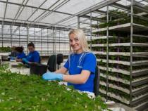 Cautam personal agricultura Olanda