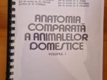 Anatomia animalelor domestice - medicina veterinara