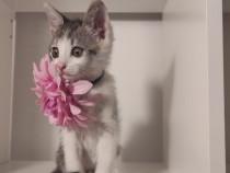 Adopție, donație! 3 pisicuțe