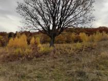 2,1 ha teren intravilan și pădure în zonă turistică