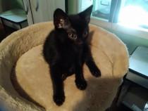 Adopție pisică vaccinata