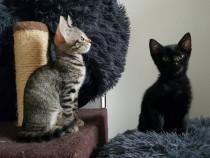 Adoptii pisicuti