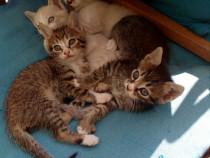 Ofer gratuit pisicute frumoase,jucăușe,2 motanei si 2 fetite