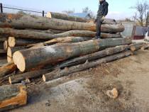 Depozit lemne de foc fag