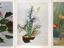 17 ilustrate necirculate, cu flori