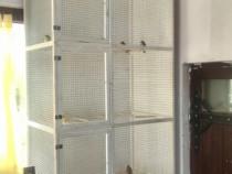 Voliere păsări (papagali, canari, etc.)