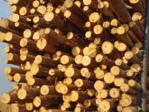 Bile molid(lemn rotund)