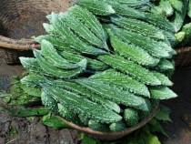 Seminte de castravete amar ( Momordica)+ 50% Gratis