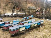 Familii de albine cu lazi noi