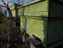 Stupi de albine | Familii de albine