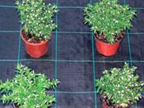 Protectie anti-buruieni folie agrotextil densitate 100g/m²