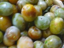 Prune albe pentru tuica (borhot)