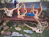 Rădăcini Red moor acvariu pesti