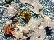 Granit concasat, marmura sparta, piatra decorativa