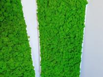 Tablou licheni verde deschis 100x40