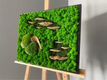 Tablou licheni muschi ciuperci 50x40 cm