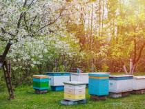 Familii de albine cu stupi