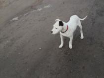 Dog Argentina