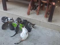 Donez 9 pui de pisica unor persoane iubitoare de animale