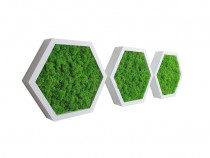 Set 3 tablouri hexagonale 30 cm albe cu licheni stabilizați
