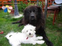 Pensiune canina Apache la doi pasi de Bucuresti