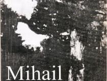 Mihail Sadoveanu-Universul operei-, Mircea Tomuș
