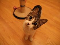 Dau spre adoptie pisica