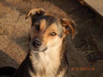 Laila, vulpita jucausa pentru adoptie