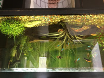 Aquarium Pești / Acvariu