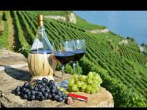 Vin de Dragasani - Sauvignon Blanc