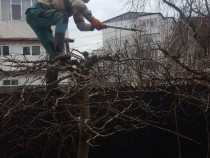 Curatenie/ defrisare teren-Toaletari arbori-Evacuare resturi
