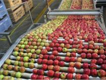 Sortatori Fructe si Legume La Banda * Germania-Leipzig