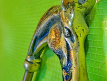 9799- maner baston/umbrela vechi cap cal anglia-england bron