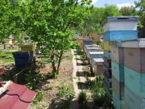 Stupi / familii de albine
