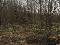 Teren casa și 1.5 hectare teren