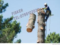 Taiere copaci, toaletare pomi rapid alpinisti autorizati