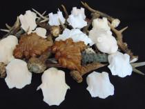 Frunze colti mistret-cornite-ticve-panoplii