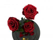 Trandafir criogenat rosu, alb, roz mov, cupola personalizata