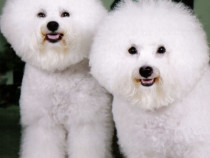 Salon frizerie canina