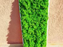 Tablou licheni verde deschis 70x30
