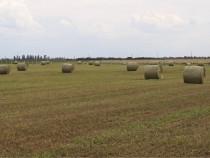 Baloți de fân / iarbă semănată