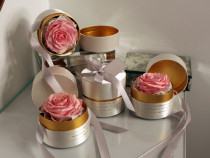 Trandafir criogenat roz gardinea domain, cutie alba, saten