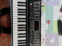 Orga electronică