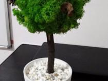Copac din licheni stabilizati.