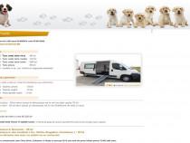 Servicii complete | salon mobil | frizerie canina si felina