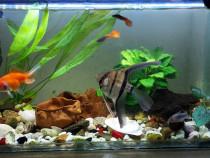 Acvariu 45 l cu diferite specii de pești